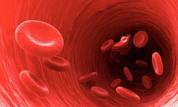 leukosit, thalasemia, trombosit normal, thalasemia adalah, fungsi darah, penyakit anemia, hemoglobin adalah, trombosit adalah, sel darah putih, sel darah merah, leukosit tinggi, kanker darah,kurang darah, penyebab anemia, leukosit adalah, leukosit normal, leukosit rendah, fungsi plasma darah, fungsi sel darah merah, penyebab hb rendah, komponen darah, basofil, fungsi trombosit, fungsi sel darah putih, apa itu trombosit, apa itu hemoglobin, apa itu leukosit, penyebab kurang darah, ERITROSIT.